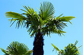 bottom view five  palms against the blue sky