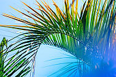 blurred background with palm leaf