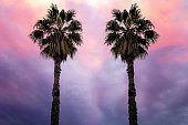 palm trees on the background of beautiful sky