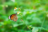 Closeup butterfly on nature flower with copy space