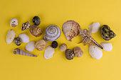 top view seashells