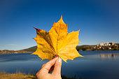 vibrant  autumn yellow leaf against blue sky