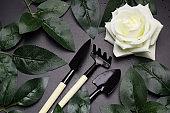 top view  gardening tools ,rose leaves, rose flowers