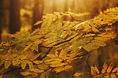autumn forest trees yellow foliage