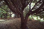 old big tree in park