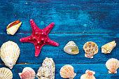 sea shells on a blue wooden boards