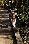 cute fluffy cat walking