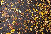 top view fallen autumn leaves