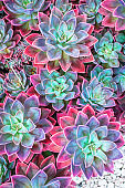 Succulents arranged on the ground