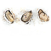 Overhead square photo of three oysters on white with copy space