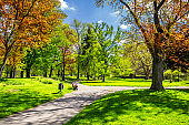 Magical autumn park with path and fantastic glow, fairytale landscape with red foliage