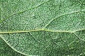 Tree leaf.
