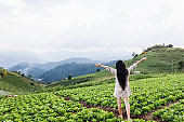 girl standing in vegetable field and mountain nature fresh view, organic farm on the hill