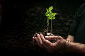 Young plant on soil in a hand of an farmer