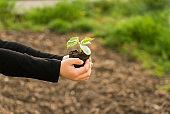 Little boy holding cucumber seed