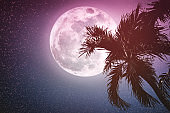 Beautiful night landscape of sky with supermoon behind betel palm tree.