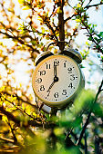 old metal alarm clock hanging in the spring garden on a flowering Bush on a Sunny day