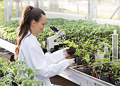 Agronomist with seedling in greenhouse