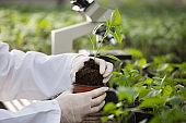 Agronomist holding seedling in hands
