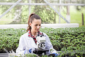 Woman agronomist with seedlings and microscope in greenhouse