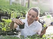 Woman agronomist supervising seedlings in greenhouse