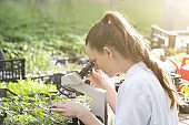 Agronomist woman with seedlings and microscope in greenhouse