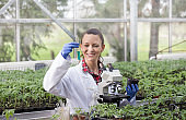 Agronomist woman with seedlings in greenhouse