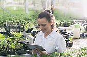 Woman agronomist with tablet and seedlings in greenhouse