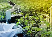 Agronomist potting seedlings in greenhouse