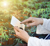 Biologist holding tablet in greenhouse