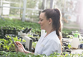 Woman agronomist with seedlings in greenhouse