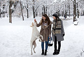 Girld playing with dog on snow