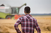 Farmer standing on field during harvest