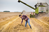 Farmer with tablet on field during harvest