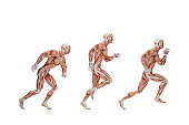 Running cycle. Anatomical illustration. Isolated. Contains clipping path