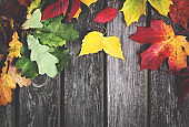 Multicolored leaves on old wooden background