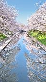Cherry blossoms at the Matsu river