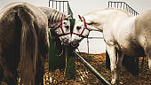 Farm Animals Horses