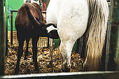 Farm Animals Horse and Foal