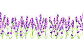 Lavender flowers seamless pattern. Watercolor natural illustration of Provence herbs