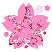 Background with sakura or cherry blossom. Floral japanese ornament of blooming flowers