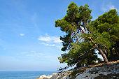 The rocky shores of the Adriatic Sea.Istria,Croatia.