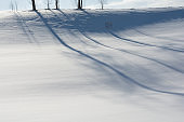 Shadow of winter grove on snow in Biei