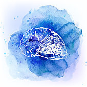 Seashells on watercolor blue background. Sea background