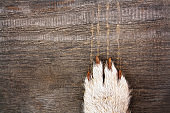 Dog's claw with long claws leaves scratches on a wooden background. Copy space