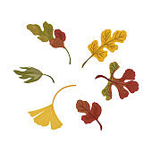 Vector set of autumn leaf