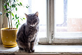 Cute funny tabby gray cat sitting on the window