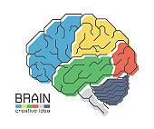 Brain anatomy with flat color design and outline stroke . Frontal Parietal Temporal Occipital lobe Cerebellum and Brainstem . Creative idea concept