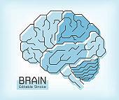 Brain anatomy and outline stroke . Frontal Parietal Temporal Occipital lobe Cerebellum and Brainstem . Medical concept . Editable stroke .