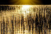 The silhouette of the grass in the water reflects the sun.